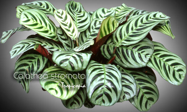 Image Result For Pictures Of House Plants