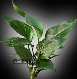 Tropicopia Online House Plant Care And Maintenance Of