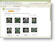 Tropicopia en ligne conseils entretien et soins images for Recherche sur les plantes